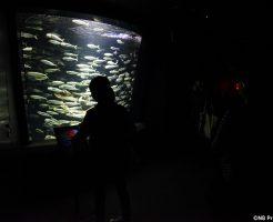 サンシャイン水族館「七人ミサキ」