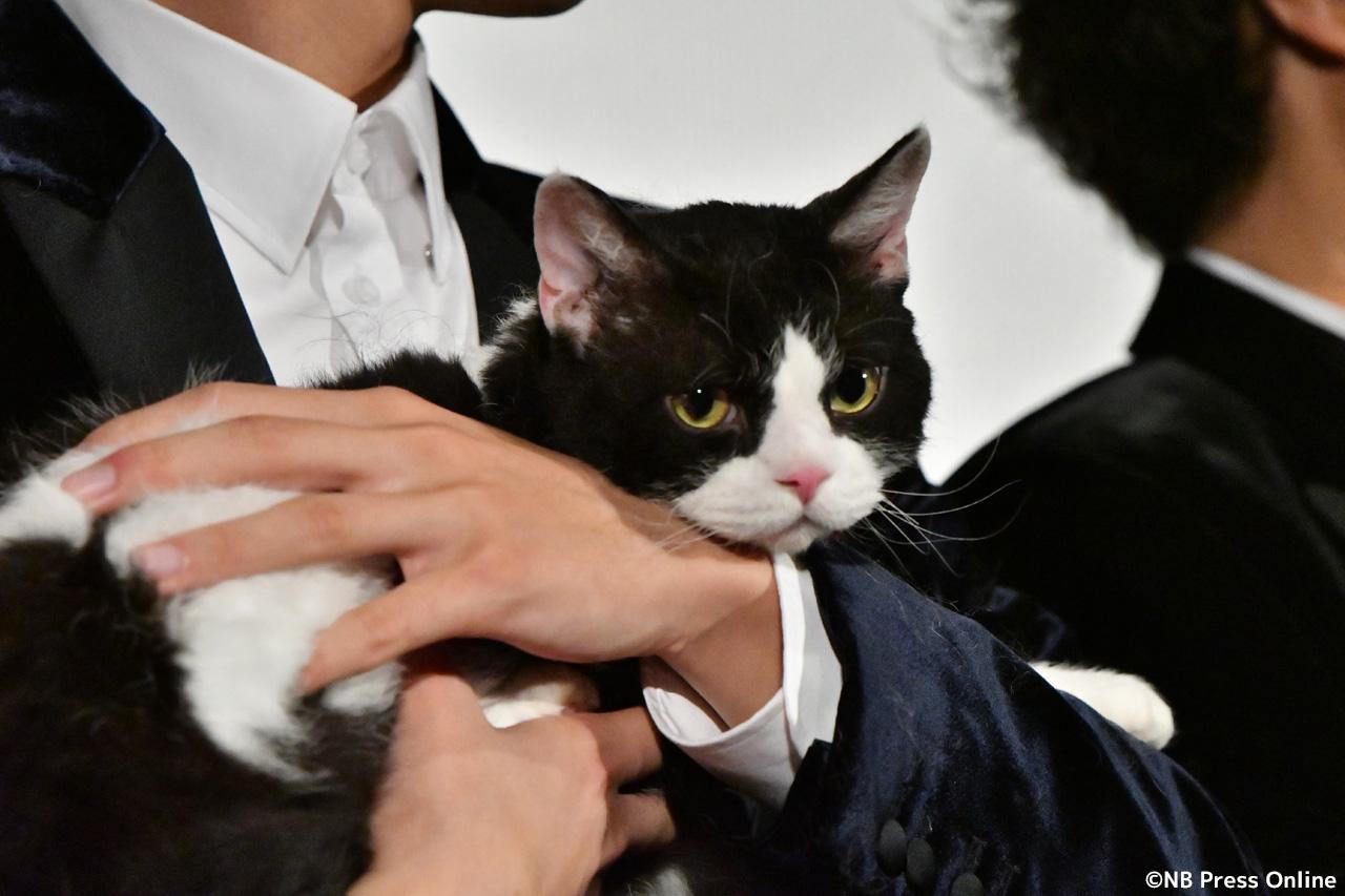 ナナ『旅猫リポート』舞台挨拶