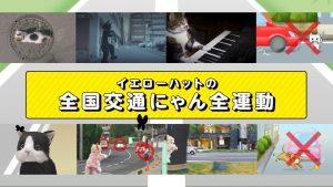 猫専用交通安全動画