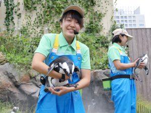 草原のペンギン - サンシャイン水族館