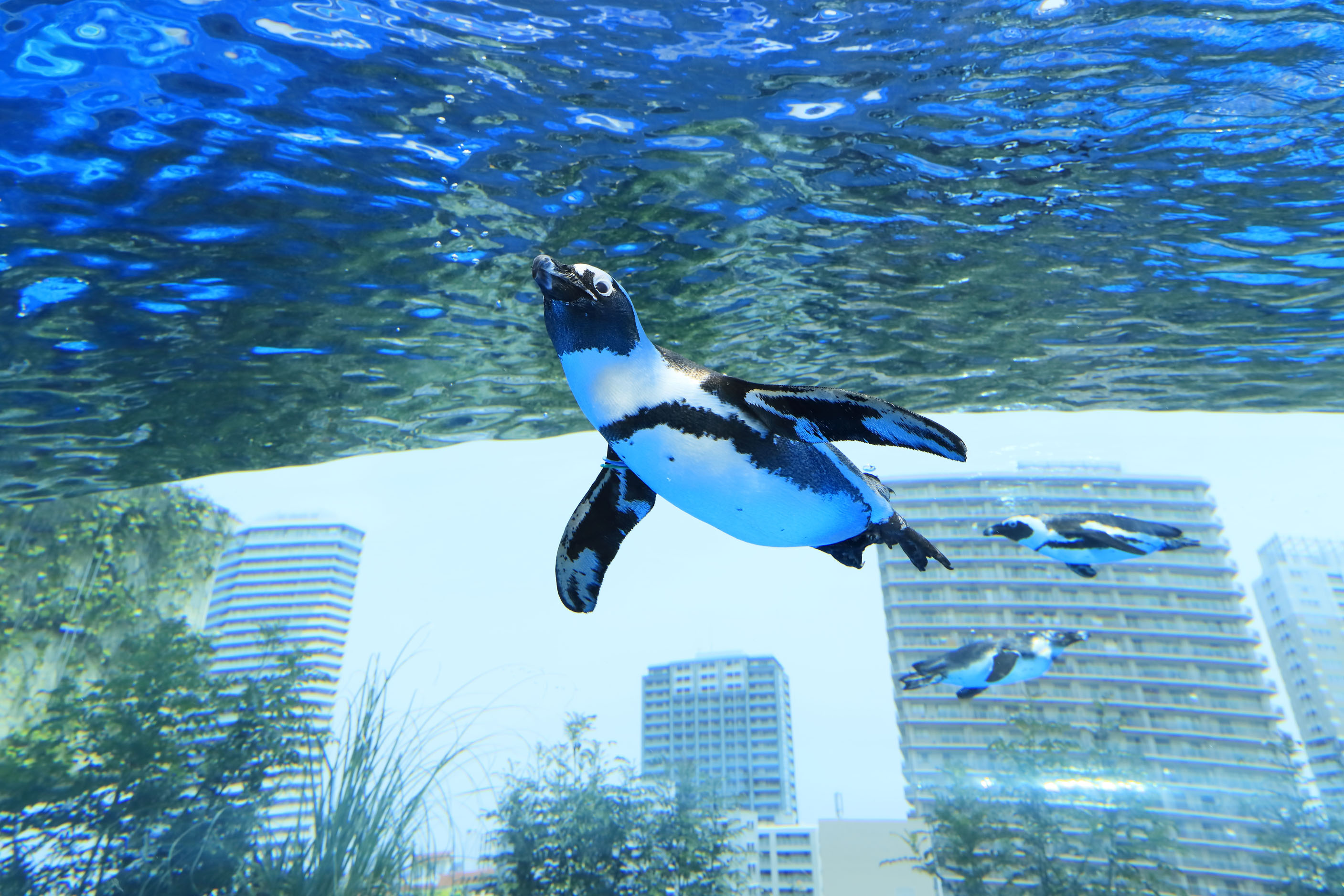 天空のペンギン - サンシャイン水族館