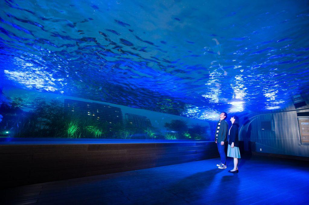 天空のペンギン(夜)- サンシャイン水族館