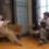 峯田和伸&橋本マナミ。日本、台湾、マレーシアの年越しを舞台にした映画『越年 Lovers』公開決定