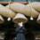 """女優・蒔田彩珠が映画の舞台、出雲へ。""""神在月""""の聖地で大ヒット祈願参拝"""